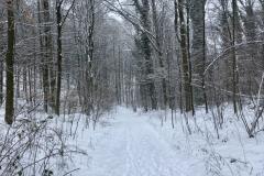 Aufstieg zum Hirschkopfturm bei Schnee